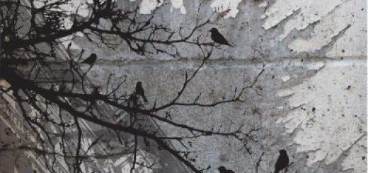 La cresta dell'upupa, Edizioni Ensemble, Daniele Borghi